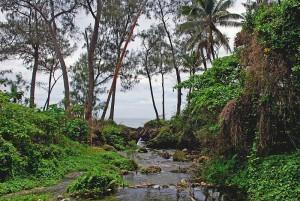 800px-A_stream_on_Efate,_Vanuatu