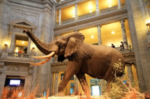 800px-USA-National_Museum_of_Natural_History0