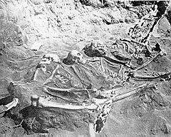 240px-Burial_Ridge_Skeletons