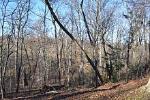 220px-Looking_NW_at_Arlington_Woods_-_Section_29_-_Arlington_National_Cemetery_-_2013-01-18