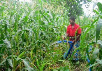 Malawi's climate change challenge