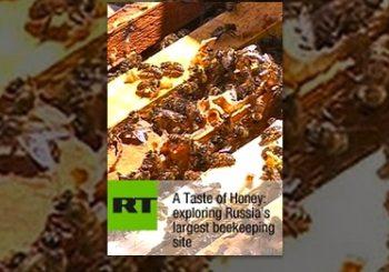 A Taste of Honey: exploring Russia's largest beekeeping site